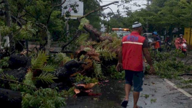 Pohon tumbang di Kota Makassar, akibat hujan deras disertai angin kencang, pada Jumat dini hari hingga sekarang, (2/4/2021). [Dok: trotoar.id]