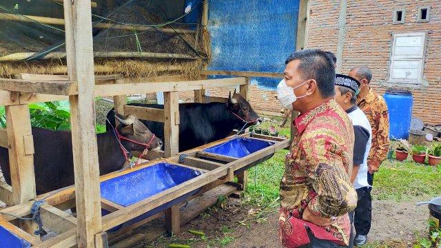 Bupati Andi Utta saat memantau kandang sapi di daerahnya.