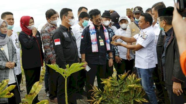 Menteri Pertanian Syahrul Yasin Limpo Melakukan Panen Raya Pirang di Kabupaten Sidrap di dampingi Wakil Ketua DPRD Sulsel Syaharuddin Alrif