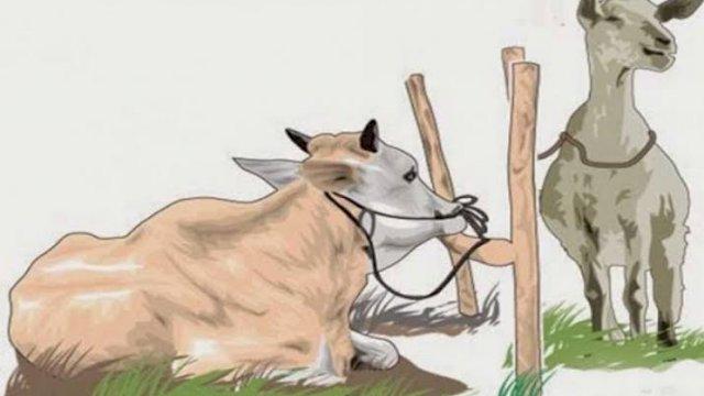 -- Kantor Kementerian Agama (Kemenag) Kabupaten Bulukumba mencatat sebanyak 1.342 ternak yang akan dikurbankan pada perayaan Idul Adha tahun 2021. Jumlah tersebut terdiri dari 1.274 ekor sapi dan 68 ekor kambing.