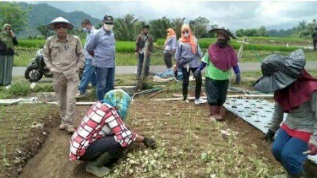 Dinas Pertanian Palopo Belajar Pengembangan Tanaman Hortikultura di Sinjai Barat