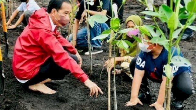Saat Jokowi sedang menanam Mangrove bersama anak-anak.