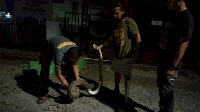 Aksi Heroik Brimob Bone Tangkap Ular Phyton di Area Pemukiman Warga